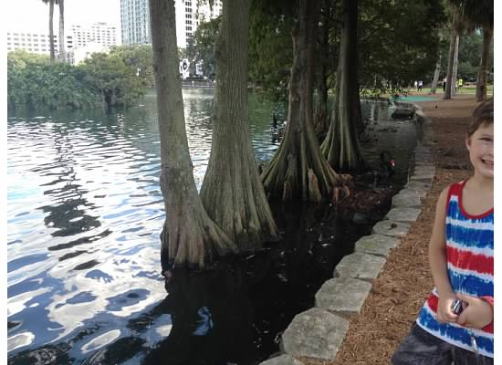 Lake Eola cypress trees